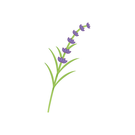 Branch of lavender