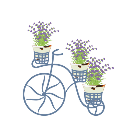 Vintage bycicle with lavender on the white background. Vector illustration