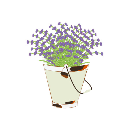 Bucket of lavender on the white background. Vector illustration