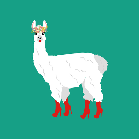 Llama in boots on the green background. Vector illustration Illustration