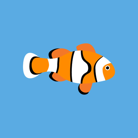 Amphiprion clown fish on the blue background. Vector illustration