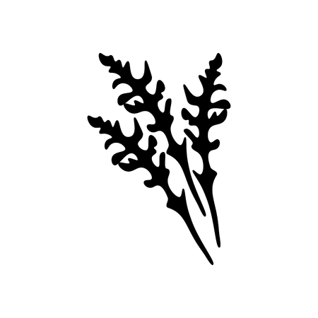 Arugula silhouette on the white background, Vector illustration