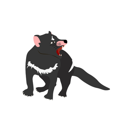 Tasmanian devil on the white background, Vector illustration