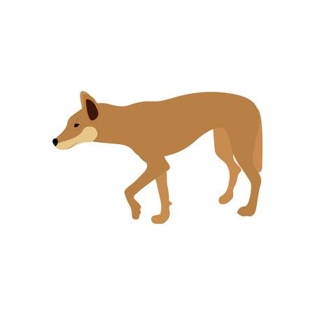 The Australian Dingo on the white background, Vector illustration