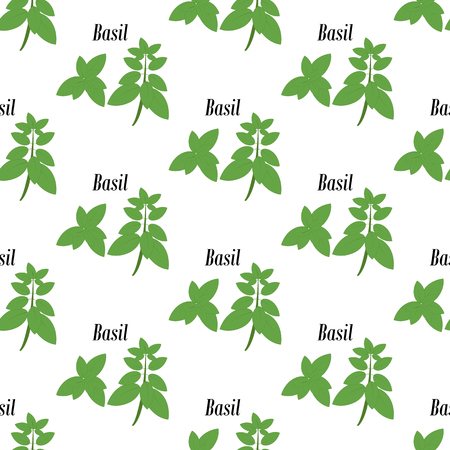 Green basil seamless pattern on the white background. Vector illustration