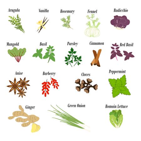 Hierbas y verduras y especias ilustración sobre fondo blanco. Ilustración vectorial