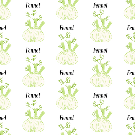 Fennel seamless pattern on the white background. Vector illustration