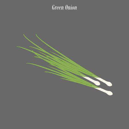 Green onion illustration on the gray background. Vector illustration Иллюстрация