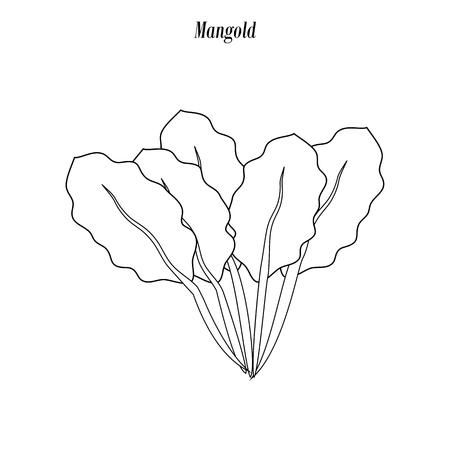 Chard salad illustration outline on the white background. Vector illustration