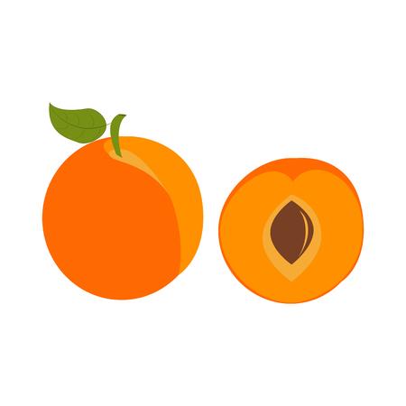 Aprikosenfruchtillustration auf dem weißen Hintergrund. Vektor-Illustration Vektorgrafik