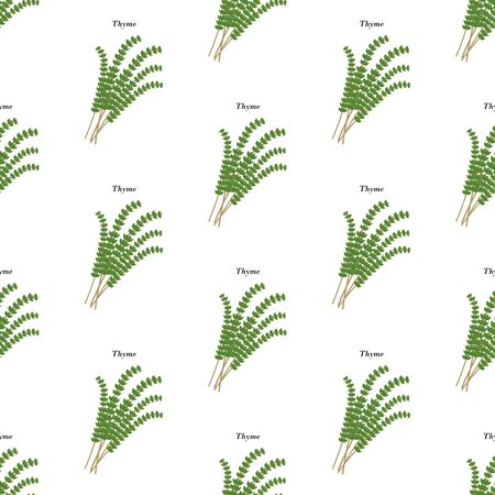 Thyme herb seamless pattern on the white background. Vector illustration