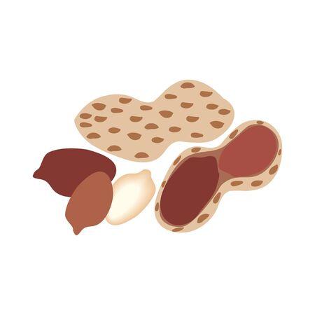 Peanut in shell illustration