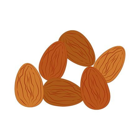 Almond nuts illustration on the white background. Vector illustration