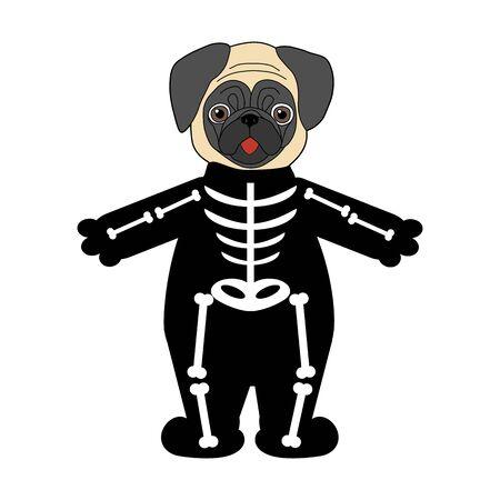 Halloween pug in skeleton costume illustration on the white background. Vector illustration