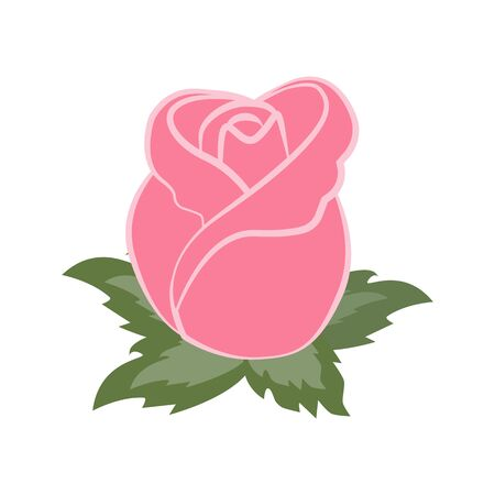 Rosebud flower illustration on the white background. Vector illustration