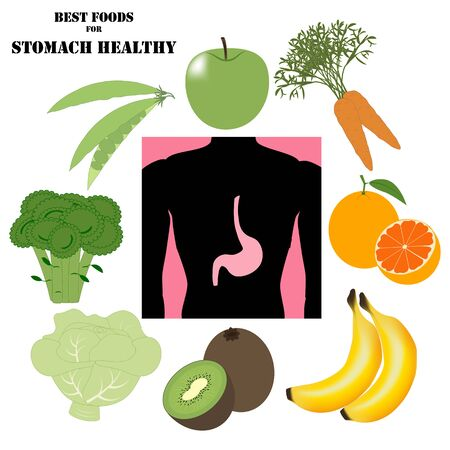 Best foods for stomach healthy illustration on the white background. Vector illustration