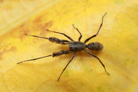 spider on yellow leaf.