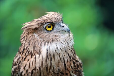 close up eagle owl in nature
