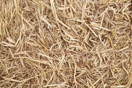 dry yellow hay using for agriculture background