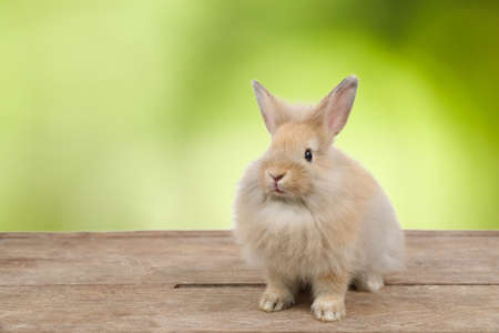 cute brown easter bunny rabbit on wood and white background
