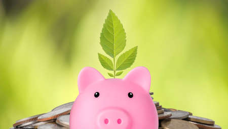 Business investment and saving growth for advertising concept. Plant growing on piggy bank on stacking coin and green nature background, meaning of growing or saving or earning money