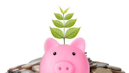 Business investment and saving growth for advertising concept. Plant growing on piggy bank on stacking coin on white background isolated, meaning of growing or saving or earning money