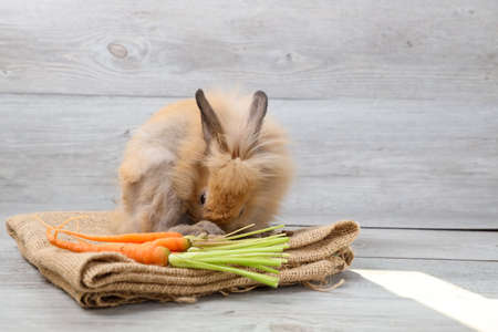 cute brown easter bunny rabbit on sackcloth with with carrots and wood background