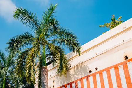 Palm tree under blue sky in Madurai, India Stock Photo