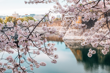 Cherry blossoms of spring in Osaka castle, Japan Stock Photo