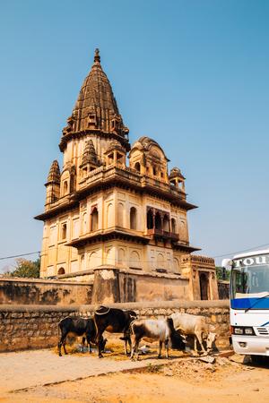 Chhatris ancient ruins in Orchha, India