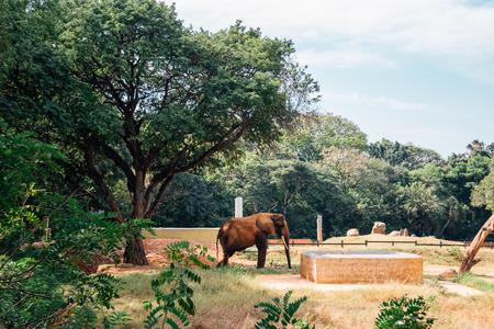 Mysore Zoo, Sri Chamarajendra Zoological Gardens in Mysore, India
