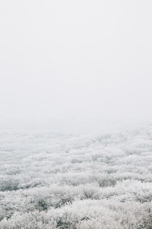 Snowy winter Hallasan mountain 1100 highland in Jeju Island, Korea 写真素材 - 121857433