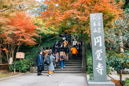 Kamakura, Japan - November 24, 2018 : Engakuji Temple with autumn maple Editorial