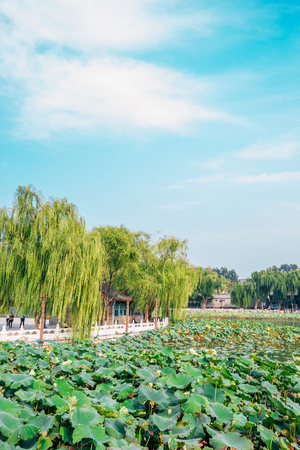 Beihai Park traditional garden and lotus leaves in Beijing, China