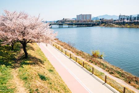 Dongchon riverside park at spring in Daegu, Korea
