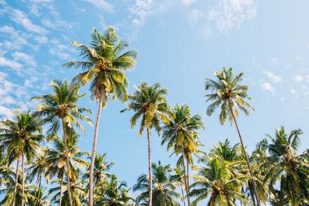 Palm trees under blue sky in Palolem beach, Goa, India 스톡 콘텐츠 - 121856806