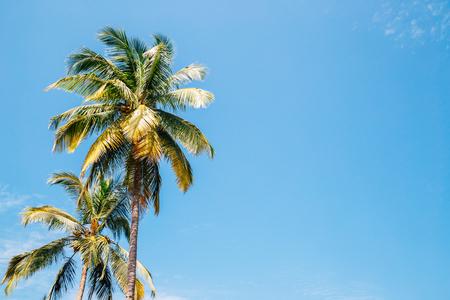 Palm trees under blue sky in Palolem beach, Goa, India 스톡 콘텐츠 - 121856810