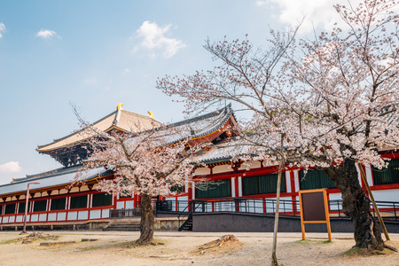 Todai-ji temple with cherry blossom at spring in Nara, Japan
