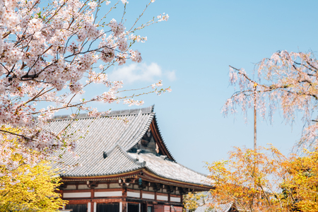 Toji temple and spring cherry blossoms in Kyoto, Japan