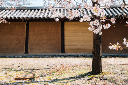 Traditional wall and cherry blossoms at Toji temple in Kyoto, Japan