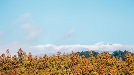 Snowy Hallasan mountain and autumn maple tree in Jeju Island, Korea Stockfoto