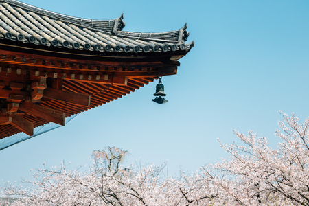 Traditional roof and cherry blossoms at Toji temple in Kyoto, Japan