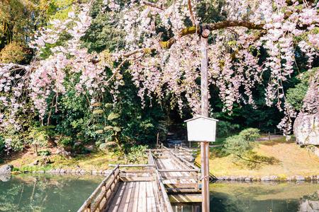 Cherry blossoms and wooden bridge at Korakuen garden in Okayama, Japan