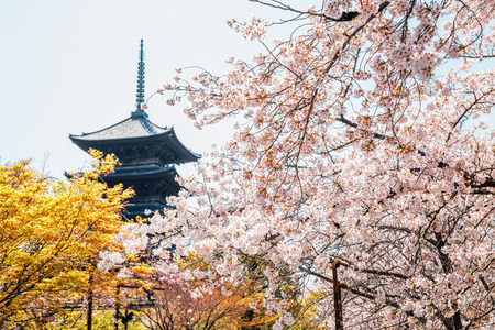 Toji temple traditional pagoda with cherry blossoms in Kyoto, Japan Redactioneel