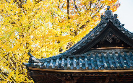 Nezu shrine traditional roof and autumn ginkgo tree in Tokyo, Japan