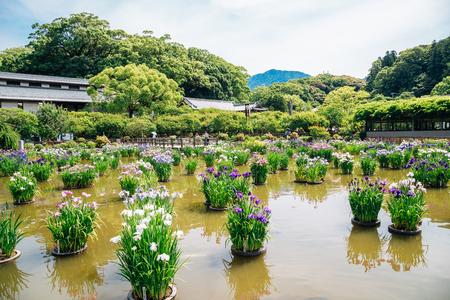 Lake and flowers at Dazaifu Tenmangu shrine in Fukuoka, Japan Stock Photo