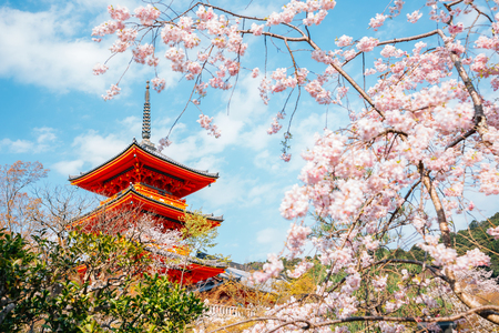 Kiyomizu-dera temple with cherry blossoms at spring in Kyoto, Japan Redactioneel