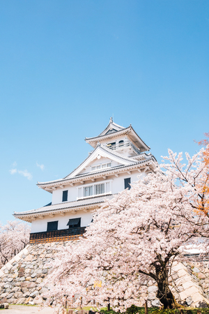 Nagahama castle with cherry blossoms in Shiga, japan