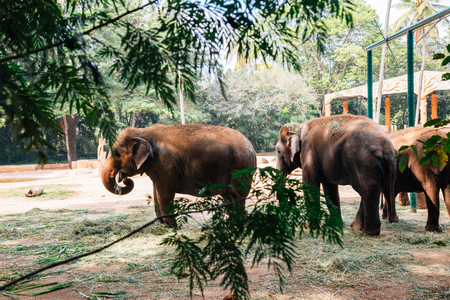 Mysore, India - December 30, 2017 : Mysore Zoo, Sri Chamarajendra Zoological Gardens Redactioneel