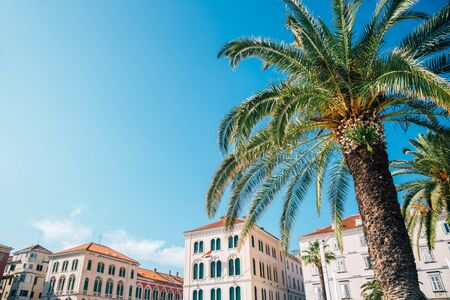 Palm tree and old buildings at Riva street in Split, Croatia 스톡 콘텐츠
